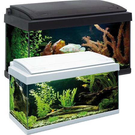 Acquario in vetro milo 60x30x34cm 60 litri completo di for Filtro x acquario